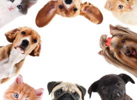 pets improve health